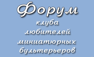 Форум о минибулях. Форуме миниатюрный бультерьер
